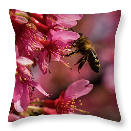 Jay Stockhaus Throw Pillow featuring the photograph Bee by Jay Stockhaus