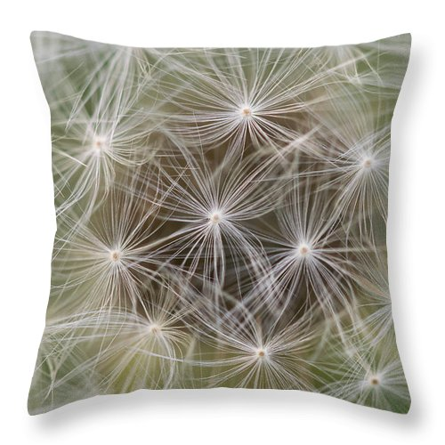 Dandelion Throw Pillow featuring the photograph Dandelion Close-up. by Wael Alreweie