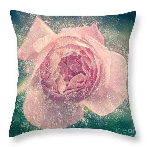 Softness Throw Pillow featuring the photograph Digitally Manipulated Pink English Rose by Humorous Quotes