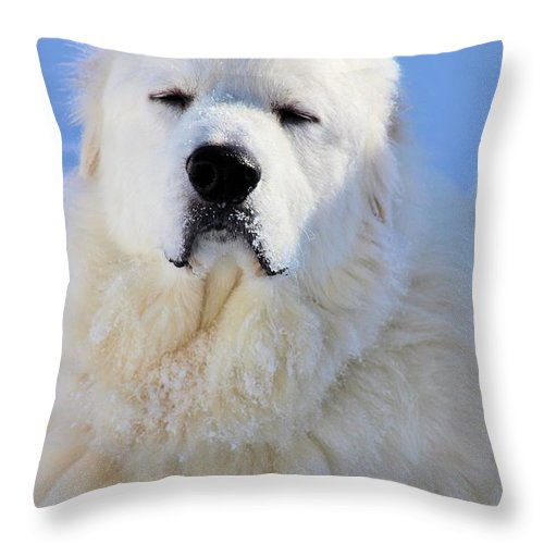 Great Pyrenees Throw Pillow featuring the photograph Great Pyrenees by Roxanne Jones