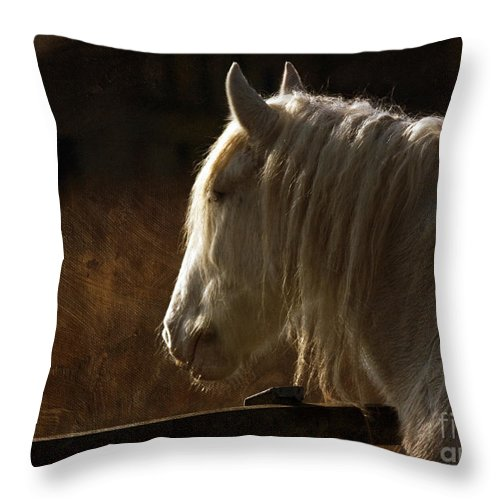 Horse Throw Pillow featuring the photograph Horse Portrait by Angel Ciesniarska