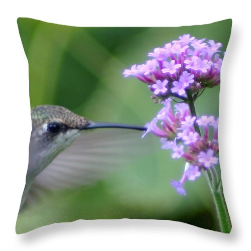 Hummingbird Throw Pillow featuring the photograph Hungry Hummingbird by Robert E Alter Reflections of Infinity