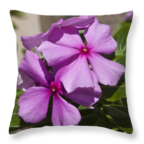 Madagascar Throw Pillow featuring the photograph Madagascar Rosy Periwinkle by Allan Hughes