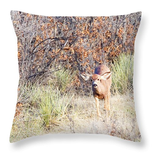Animal Throw Pillow featuring the photograph Mule Deer Doe by Steve Krull