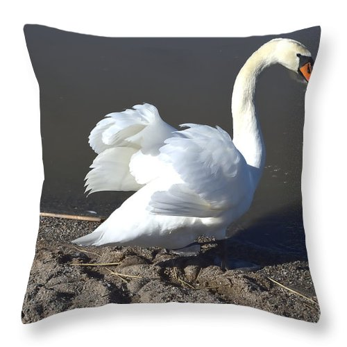 Mute Swan Throw Pillow For Sale By Esko Lindell