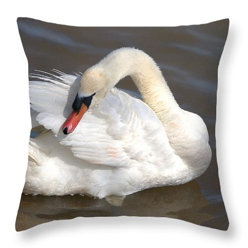 Roy Williams Throw Pillow featuring the photograph Mute Swan Grooming In Shallow Water by Roy Williams