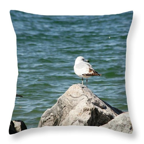Sea Throw Pillow featuring the photograph 3 Of Them At Sea by Paul SEQUENCE Ferguson       sequence dot net