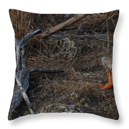 Branches Throw Pillow featuring the photograph Orange Iguana by Rob Hans