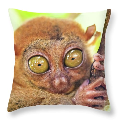 Philippine Throw Pillow featuring the photograph Phillipine Tarsier by MotHaiBaPhoto Prints