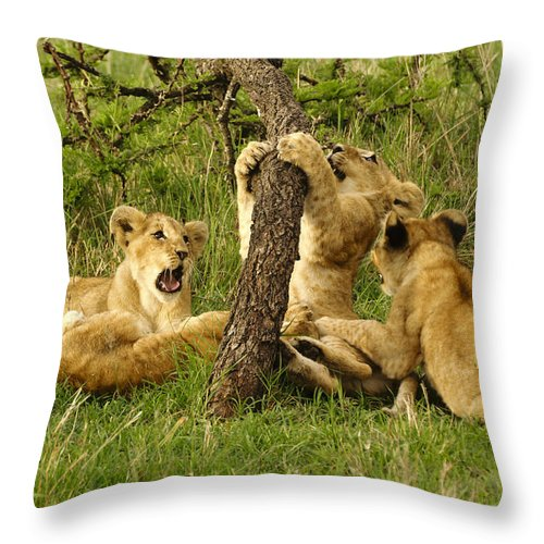 Lion Throw Pillow featuring the photograph Playtime by Michele Burgess
