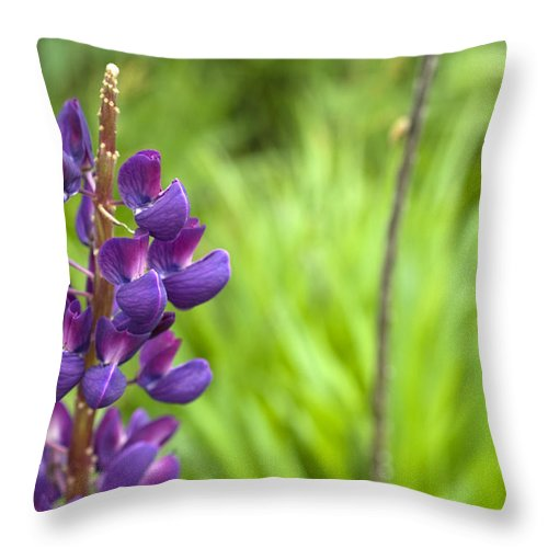 Purple Throw Pillow featuring the photograph Purple Flower by Jessica Wakefield