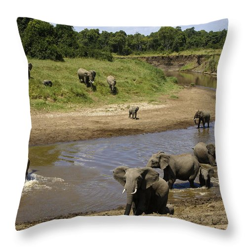 Africa Throw Pillow featuring the photograph River Crossing by Michele Burgess