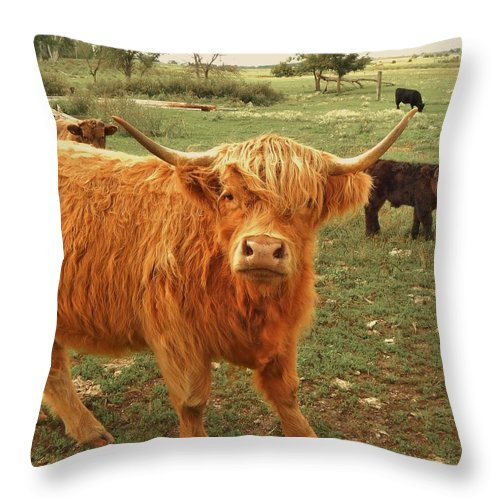 Cow Throw Pillow featuring the photograph Scottish Highlander With Big Bangs by Curtis Tilleraas