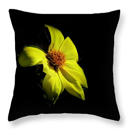 Flower Throw Pillow featuring the photograph Sunshine by Pravine Chester