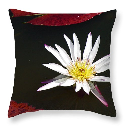 Water Throw Pillow featuring the photograph Water Lily by David Campbell