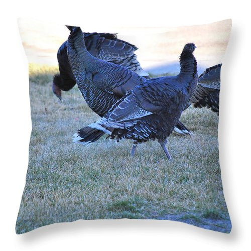 Wildlife Throw Pillow featuring the photograph Wild Turkeys. by Oscar Williams