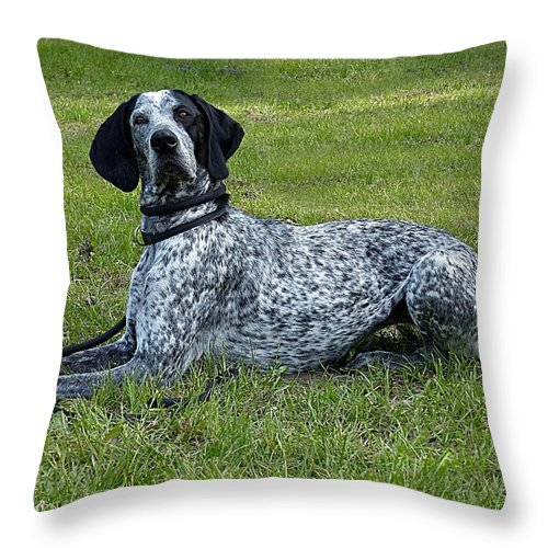 Dog Throw Pillow featuring the photograph Dog by FL collection