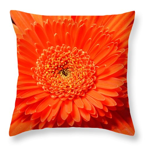 Gerber Photographs Throw Pillow featuring the photograph 3286 by Kimberlie Gerner