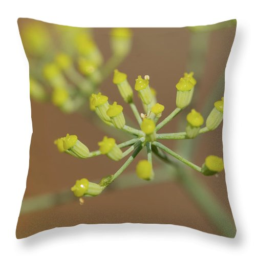 Macro Throw Pillow featuring the photograph Closeup Of A Colourful Flower by Wael Alreweie
