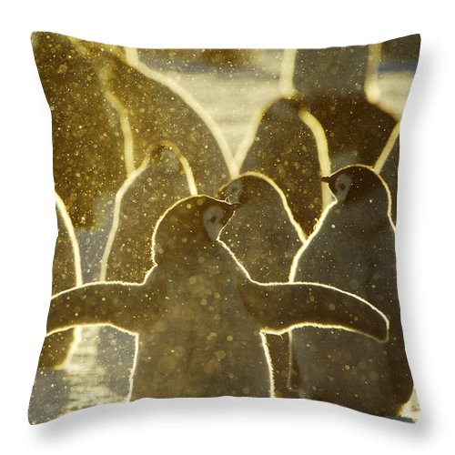 Fn Throw Pillow featuring the photograph Emperor Penguin Aptenodytes Forsteri by Jan Vermeer