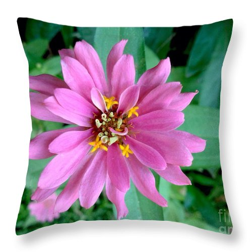Pink Zinnia Bloom Throw Pillow featuring the photograph Pink Zinnia by Virginia Artho