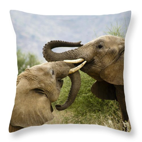 Africa Throw Pillow featuring the photograph Playtime by Michele Burgess
