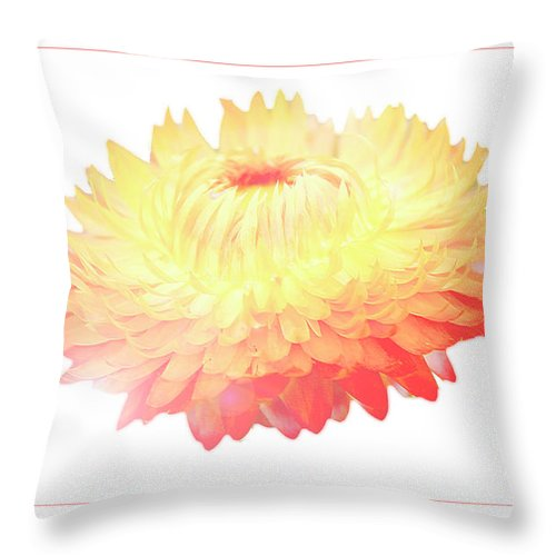 Macro Throw Pillow featuring the digital art Strawflower by A Gurmankin