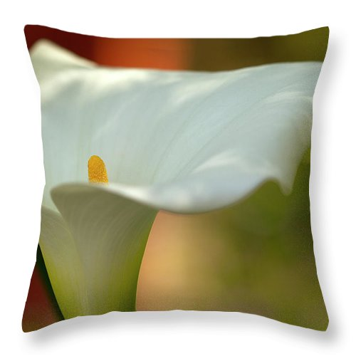 Calla Throw Pillow featuring the photograph White Calla by Heiko Koehrer-Wagner