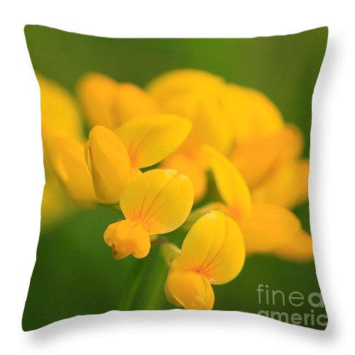 Mccombie Throw Pillow featuring the photograph Wildflower Named Birdsfoot Trefoil by J McCombie