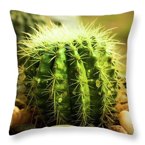 Cactus Throw Pillow featuring the photograph Cactus by Sacksith Vorlachith