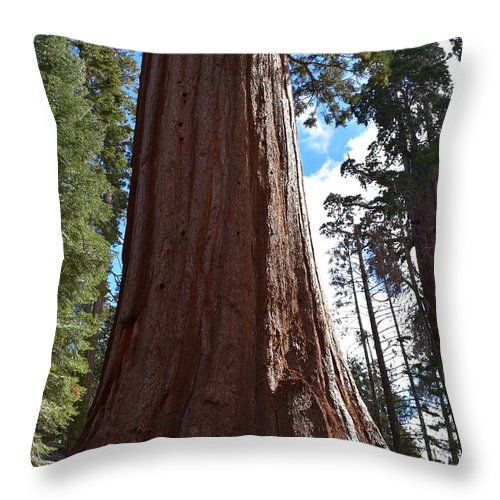 Bark Throw Pillow featuring the photograph Giant Sequoia Trees by Will Sylwester