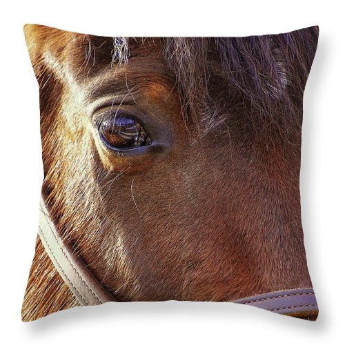 Horse Throw Pillow featuring the photograph Morgan Horse by JAMART Photography