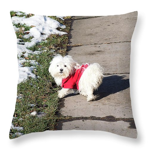 Dog Throw Pillow featuring the photograph My Small Dog by Elvira Ladocki