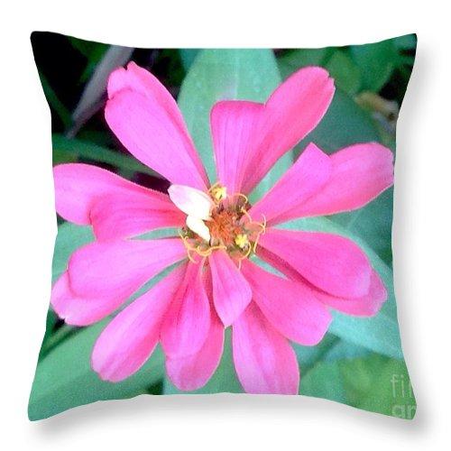 Pink Zinnia Throw Pillow featuring the photograph Pink Zinnia by Virginia Artho