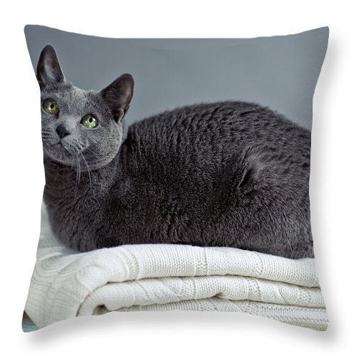 Purebred Throw Pillow featuring the photograph Russian Blue by Nailia Schwarz