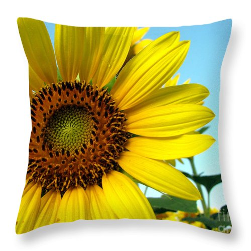 Sunflowers Throw Pillow featuring the photograph Sunflower Series by Amanda Barcon