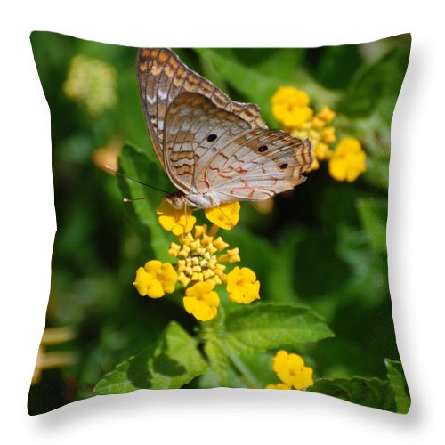 Butterfly Throw Pillow featuring the photograph 5 Yellow Flowers And A Buttefly by Rob Hans