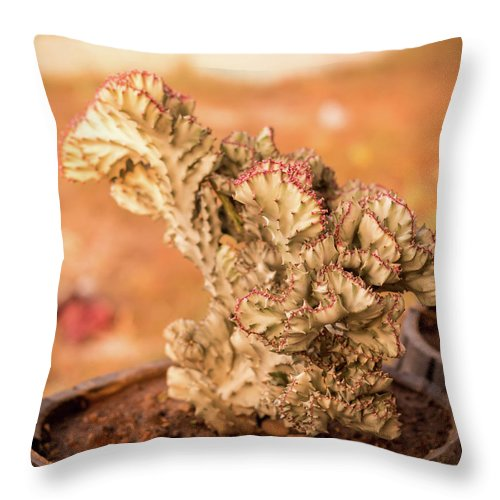 Sunlight Throw Pillow featuring the photograph Cactus by Sacksith Vorlachith