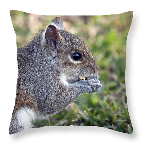 Squirrel Throw Pillow featuring the photograph Eastern Gray Squirrel by Allan Hughes