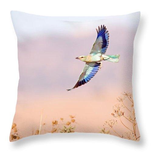 European Roller Throw Pillow featuring the photograph European Roller Coracias Garrulus by Alon Meir