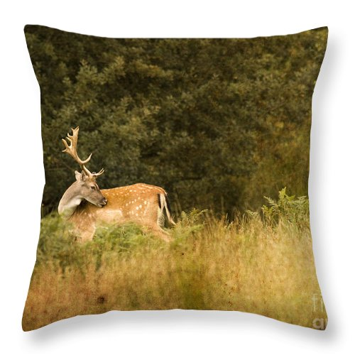 Fallow Deer Throw Pillow featuring the photograph Fallow Deer by Angel Ciesniarska