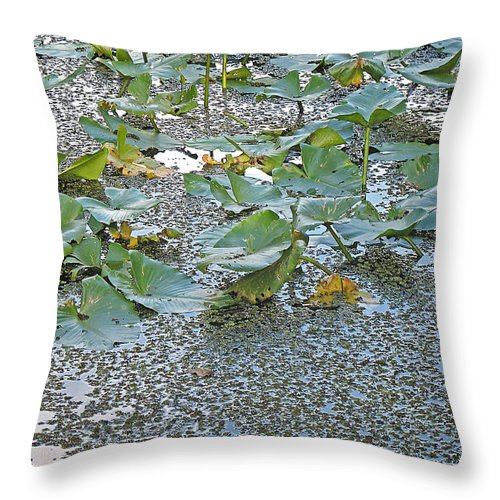 Swamp Throw Pillow featuring the photograph 6 Mile Swamp by Kenneth Albin