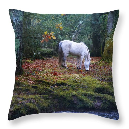 New Forest Throw Pillow featuring the photograph New Forest - England by Joana Kruse