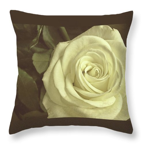 Rose Throw Pillow featuring the photograph Timeless Rose by JAMART Photography