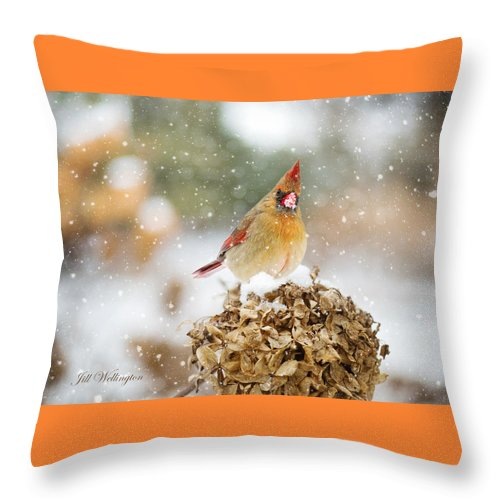 Female Cardinal Throw Pillow featuring the digital art Winter Birds by Jill Wellington