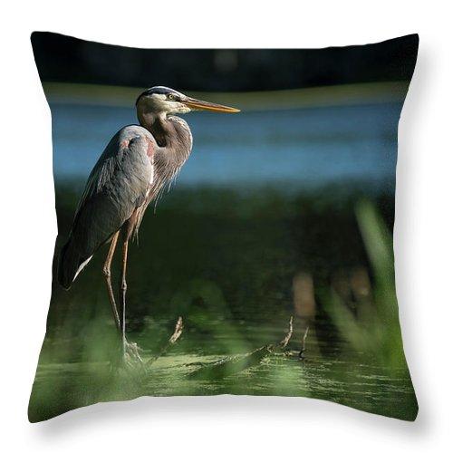 Birds Throw Pillow featuring the photograph Great Blue Heron by Gunter Weber