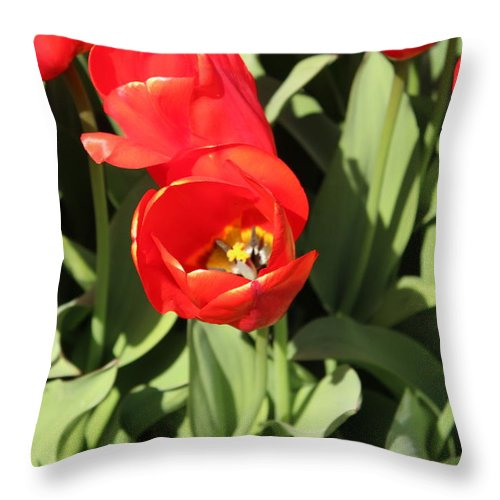 Tulip Throw Pillow featuring the photograph Tulip by Sherri Keene