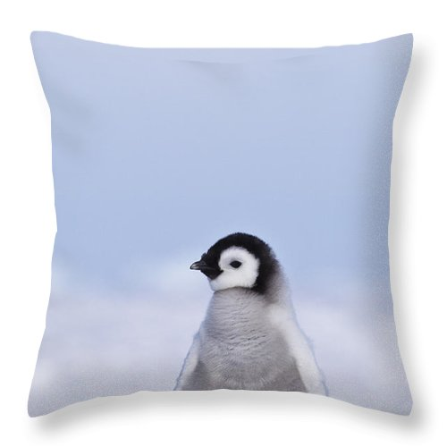 Emperor Penguin Chick Throw Pillow For Sale By Jean Louis Klein Marie Luce Hubert