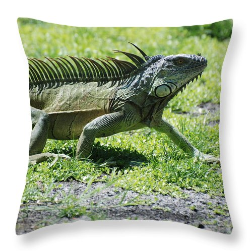 Macro Throw Pillow featuring the photograph I Iguana by Rob Hans