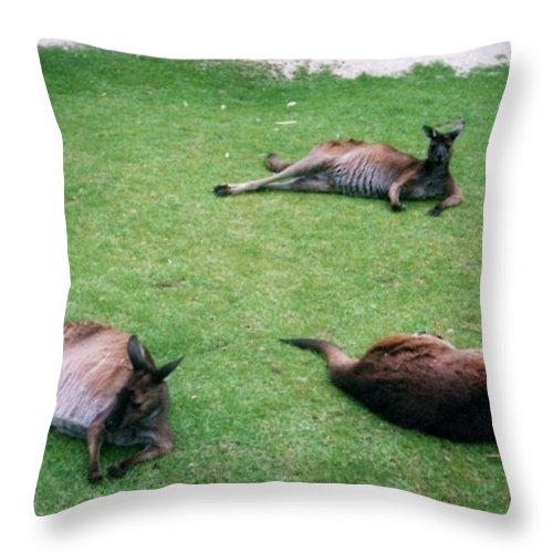 Throw Pillow featuring the photograph Australian Native Animals by Peter Halmos